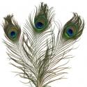 Lot de 3 Plumes de Paon - 2 tailles - Coloris Naturel